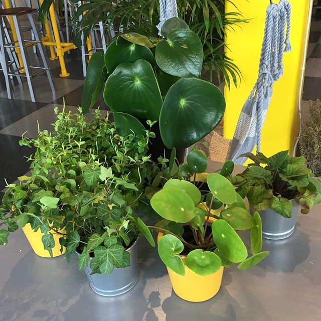 Vackra växter har vi i överflöd på Materia Popup, men hur många är de egentligen? Kom in och köp en valfri dryck (kaffe, te, våra egna joser, lemonad, smoothie eller lassi) och gissa hur många de är! Den eller de som har gissat rätt innan tisdag vinner en valfri växt av de som står på bordet. Självklart är det okej att komma in och räkna.--Tävlingen pågår till och med tisdag den artonde juli och är endast på vårt Popup-café på järntorgsgatan.