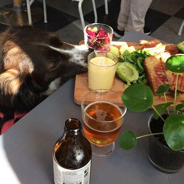 The dog Chop njuter av söndagsbrunchen. Ta gärna med era fyrbenta vänner till Materia popup.