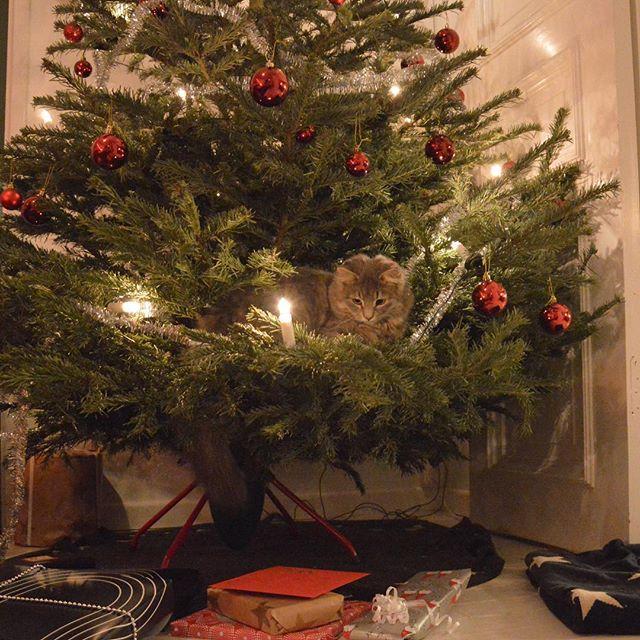 God Jul önskar vi på Materia. Vi håller oss hemma och leker i granen ett tag. Vi öppnar återigen på Majorna på tisdag 26 dec kl 10.