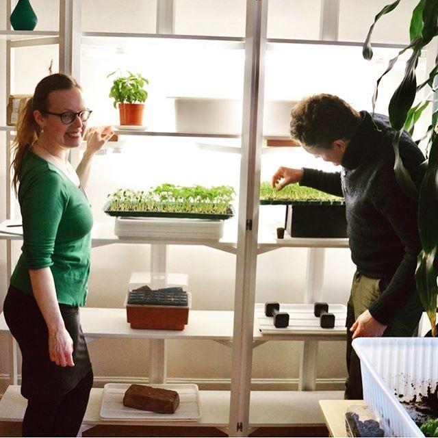 Ett nytt avsnitt med Mattjat finns ute nu. Hör Carina och Tony berätta om stadsnära och hydroponisk odling. Sök på Mattjat i din podcastapp eller lyssna på https://www.materia.nu